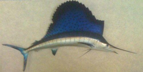 Oscar the stuffed sailfish
